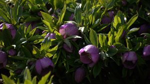 Flowers in Swarthmore