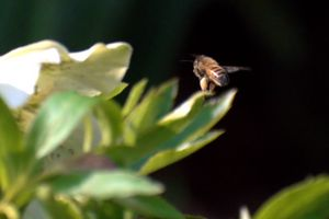 Bee With Flower #3