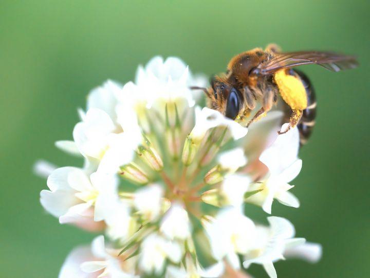 Honeybee at Work #1 - Aubrey Moat