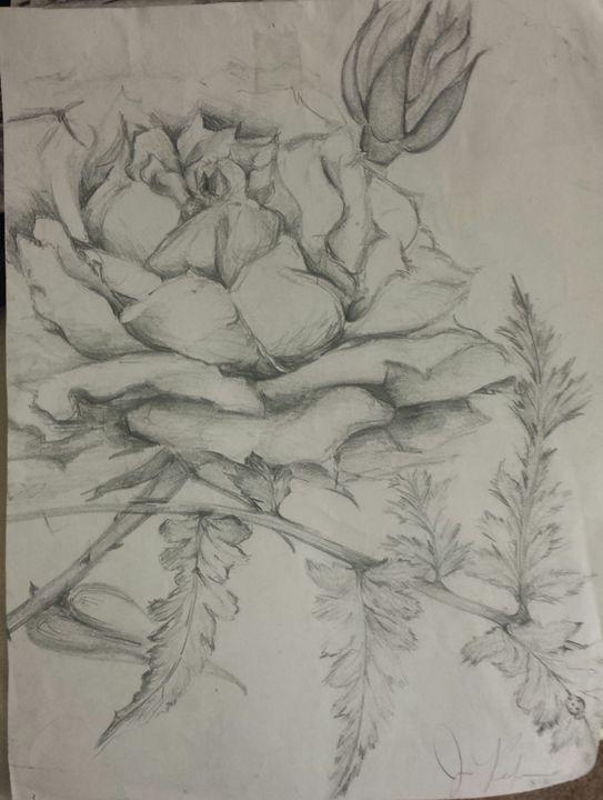 Rose Gardens - Phoenix Gallery