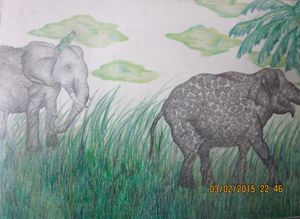 Elephants - Charlie art