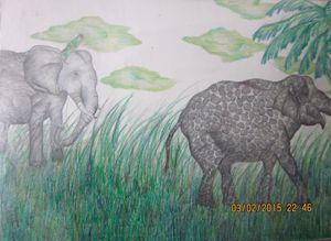 Elephants - Charlie art