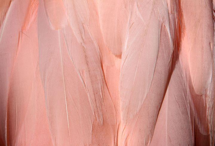 Flamingo details - Octopusiscool