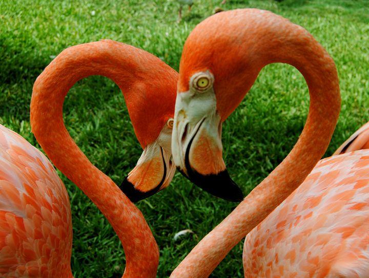 heart you - Octopusiscool