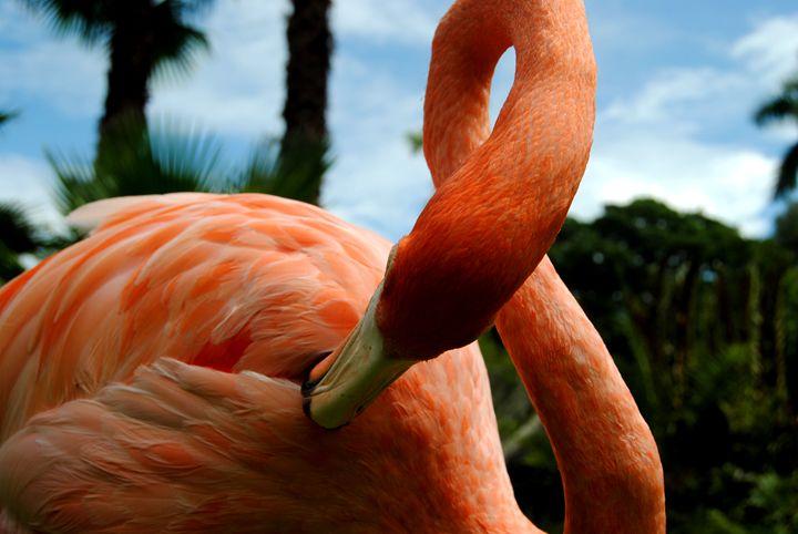 flamingo 2 - Octopusiscool