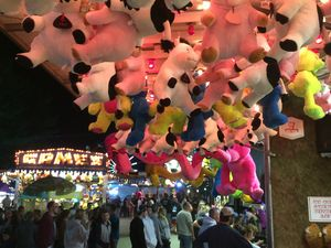 Pigs on the midway