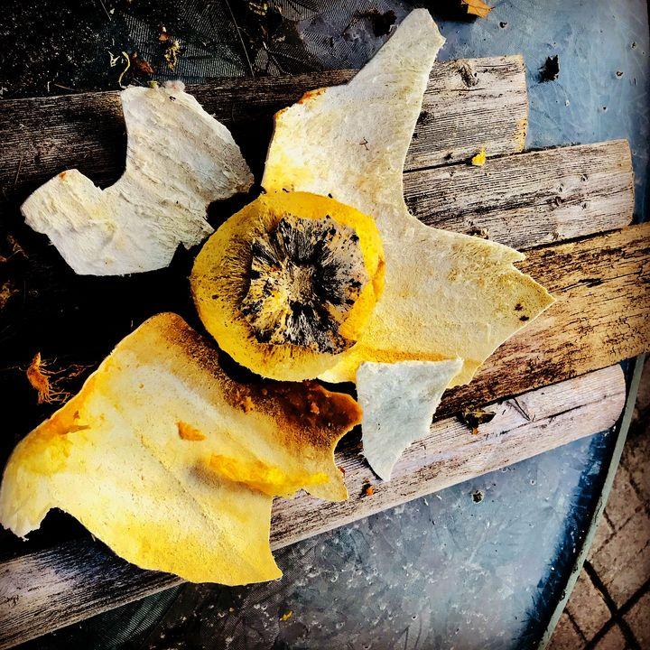 Dried Pumpkin shell, pieces - UHaveAnEye4Art