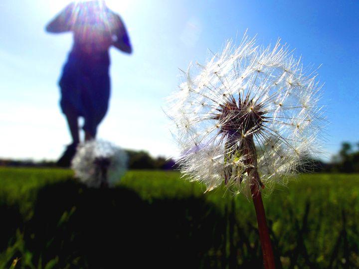 Dandelion Puffs - Kayla Tice