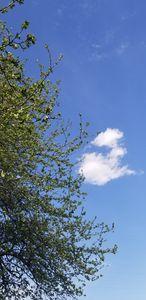Sky life
