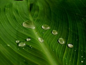 Leaf after rainfall