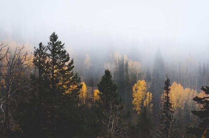 Cedar Canyon Fog - Melissa K Photography