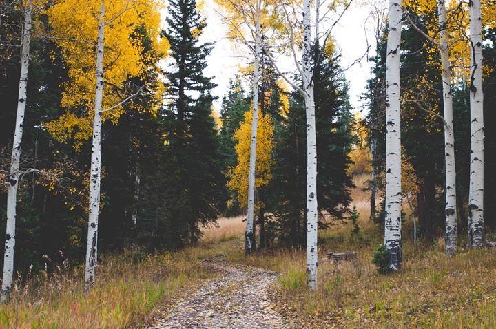 Cedar Canyon Aspens - Melissa K Photography