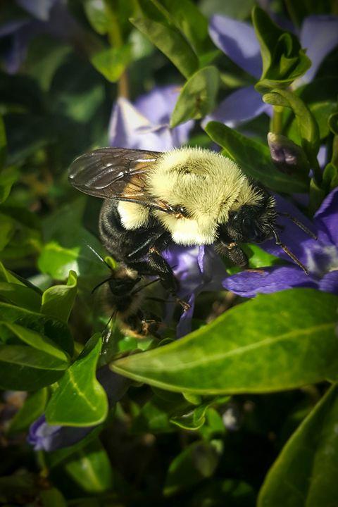 Busy Bees - Mandi May photography