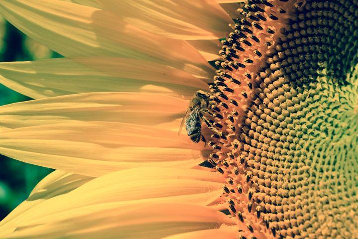 Buzzing bee - Mandi May photography