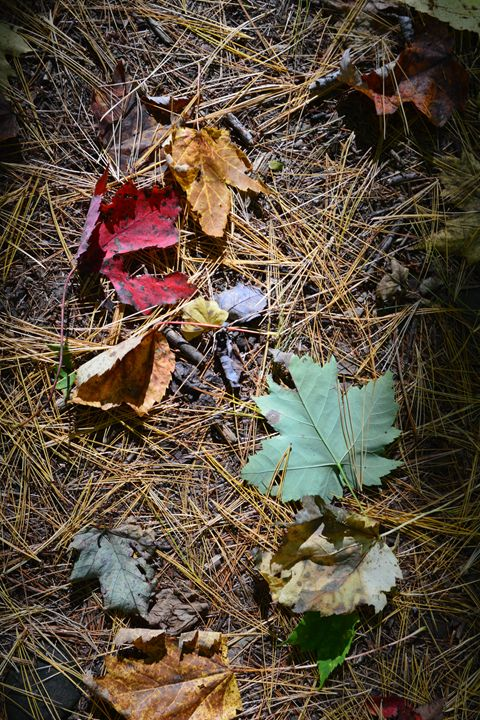 Forest floor in the fall - Mandi May photography