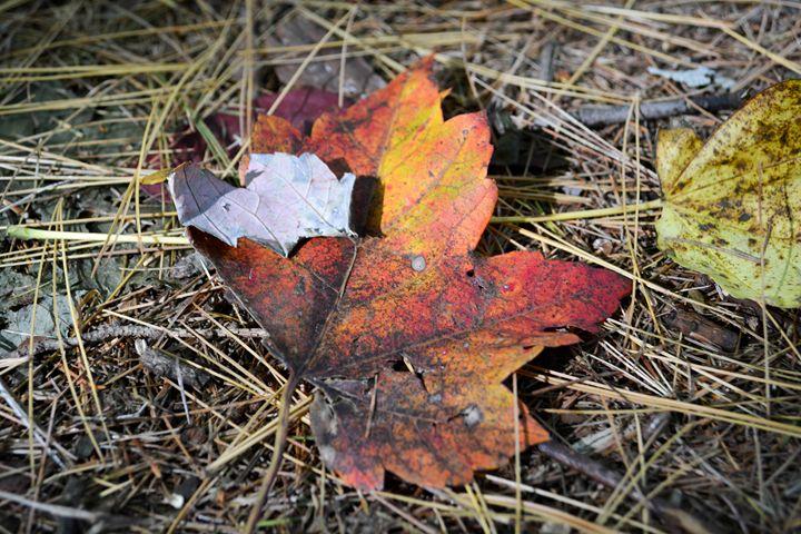 Fall color - Mandi May photography