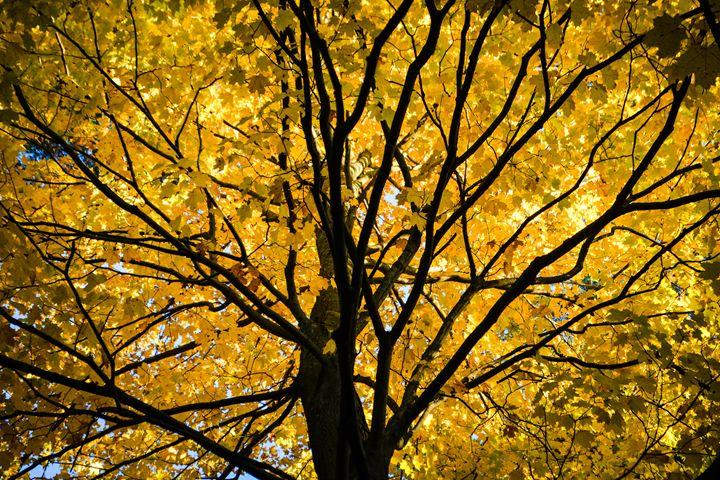 Yellow - Mandi May photography