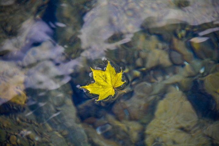 floating alone - Mandi May photography