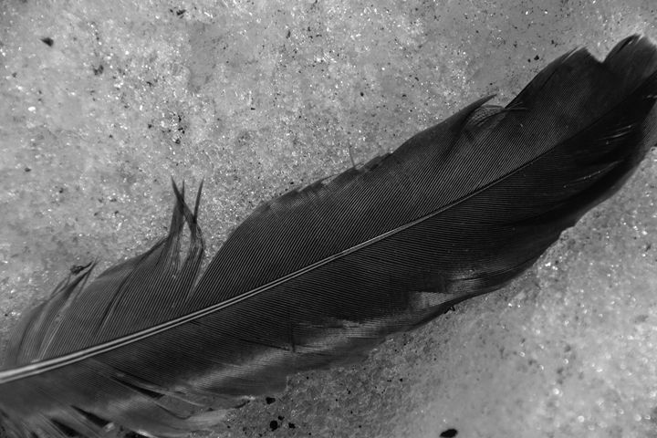 Feather in the snow - Mandi May photography