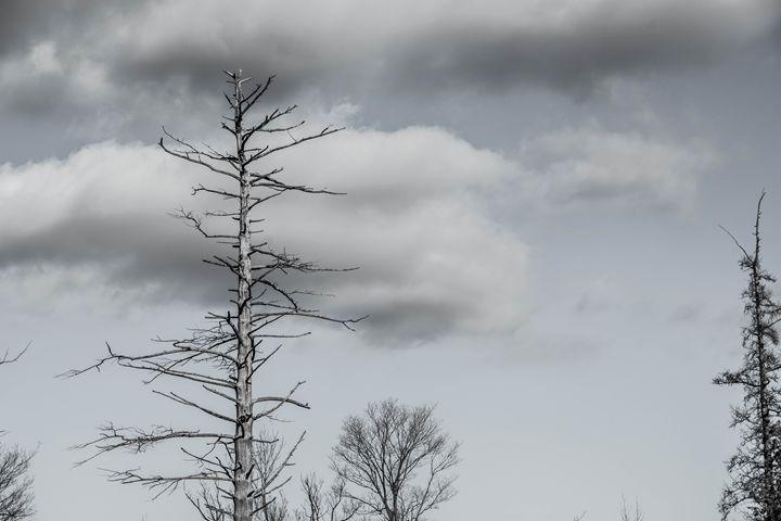 old tree - Mandi May photography