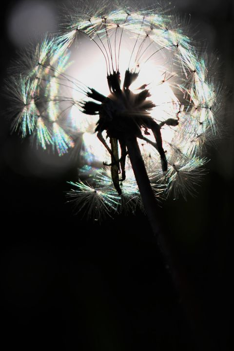 Make a wish - Mandi May photography