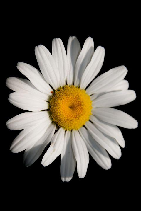 Daisy - Mandi May photography