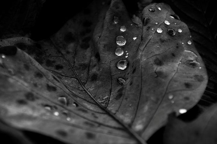 dew drops on leaf - Mandi May photography