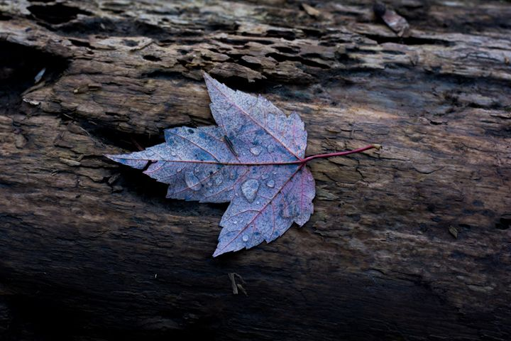 leaf - Mandi May photography