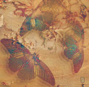 Papillons4 Mariposas4 Butterflies4