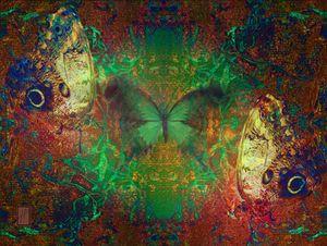 Papillons6 Mariposas6 Butterflies6