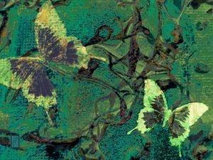 Papillons8 Mariposas8 Butterflies8