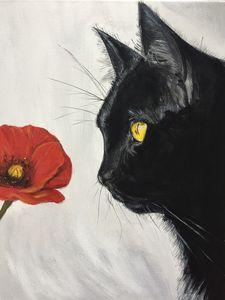 Black Cat & Poppy
