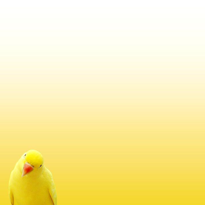 Yellow - katetheo79