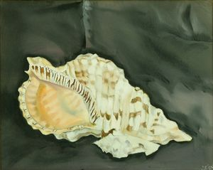 King Conch Shell With Minor Shell