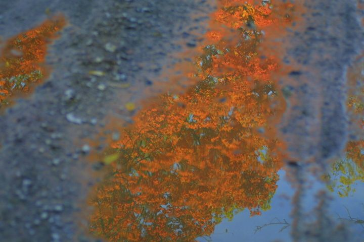 Fall reflections - glorious  nature