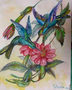 Hummingbirds garden