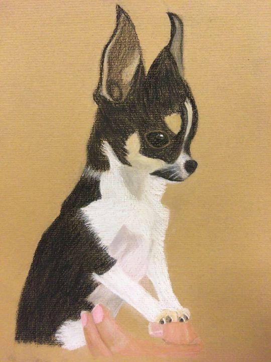 Tiny Teacup Chihuahua Nicola S