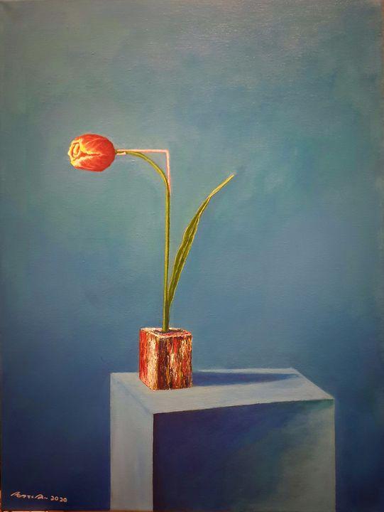 Tulips - SABANGAN