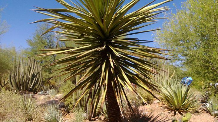 Desert Palm - Nonconformist101