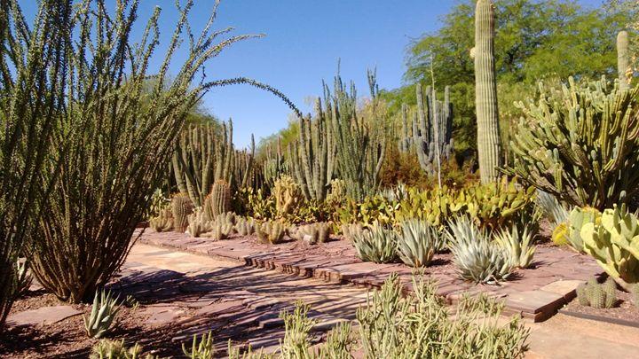 Arizona Desert - Nonconformist101