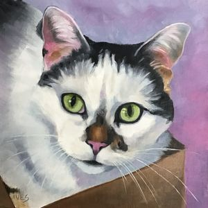 Cat Portrait Example: Hope in a Box