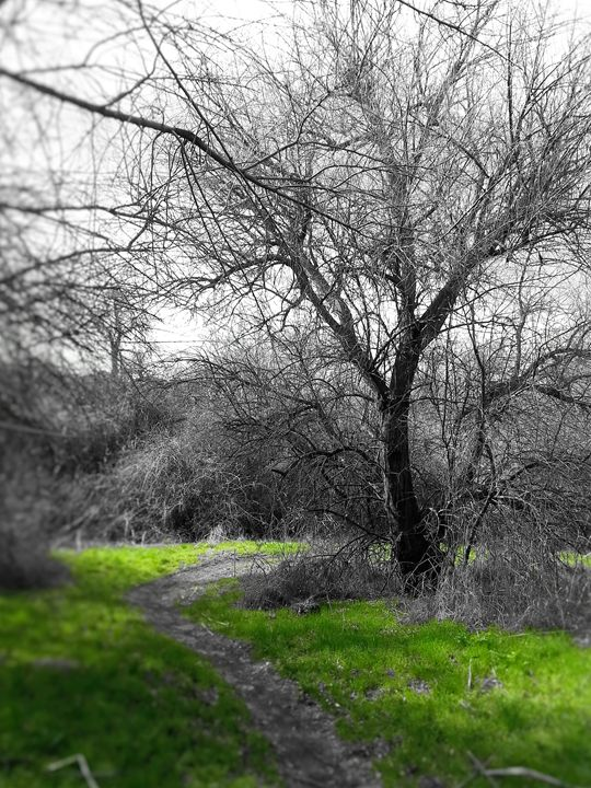 Unseen Path - Nature