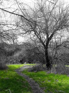 Unseen Path