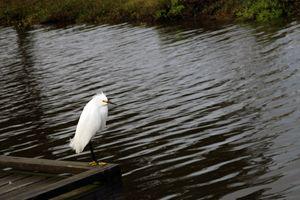 Bird on Dock
