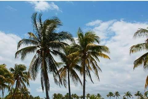 Beautiful Florida - Yeimy Esp