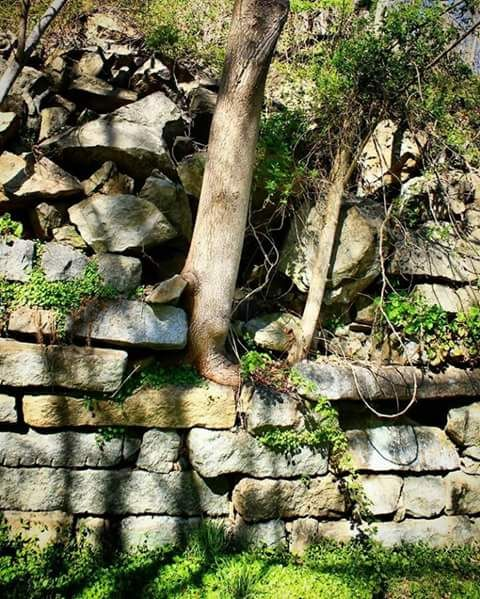 The rooted wall - Yeimy Esp