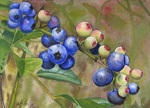 Backyard Blueberries - Jeff Atnip Art