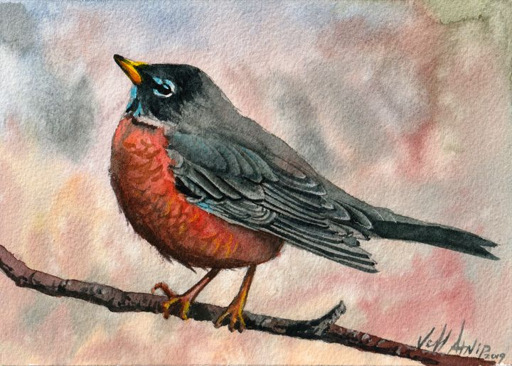 American Robin - Jeff Atnip Art