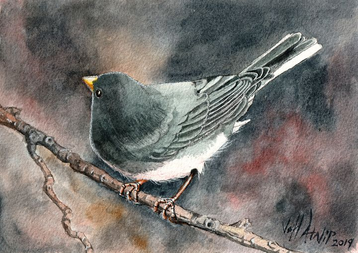 Junco - Jeff Atnip Art