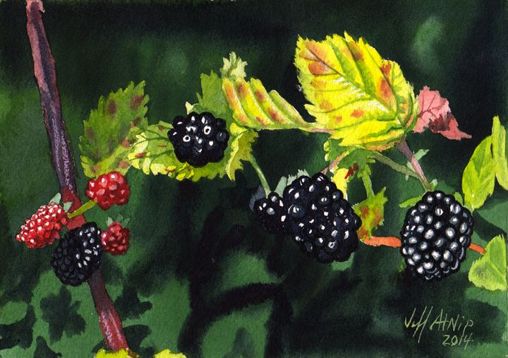 Wild Blackberries - Jeff Atnip Art